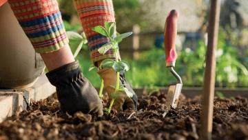 Le printemps arrive : à vos jardins !